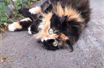 уличные кошки